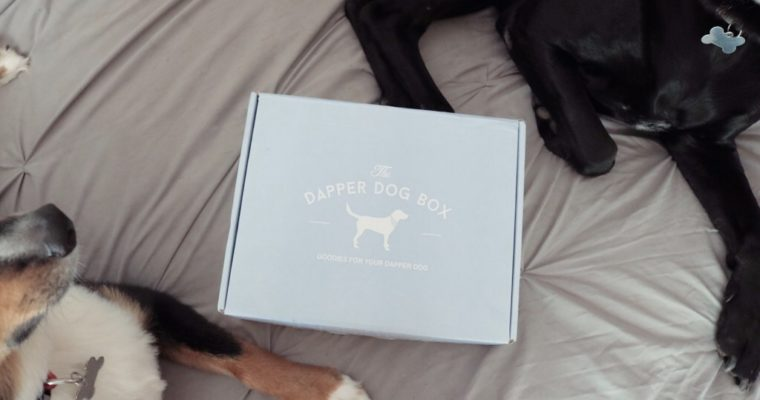 The Dapper Dog Box Review + Interview