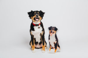 My Go-To Dallas Dog Photography Studio, Color Barking