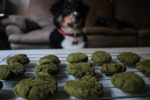 Wagadō: The Healthy Dog Treat Baking Mix