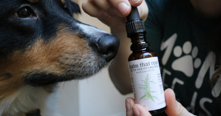 Better Your Pets Wellbeing™ with Blooming Culture