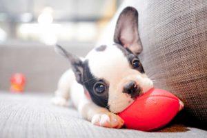 PET FIRST PET INSURANCE