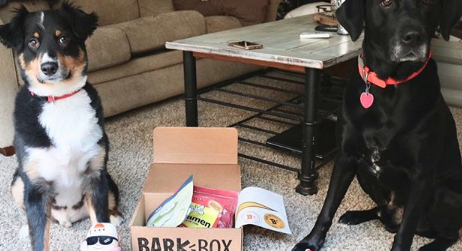 My Year with BarkBox