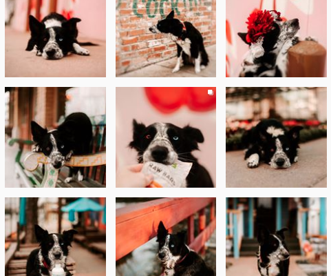 Top Dogs in Dallas to Follow on Instagram