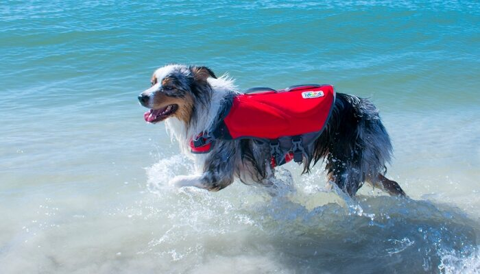 Best Life Jacket Brands for Dogs