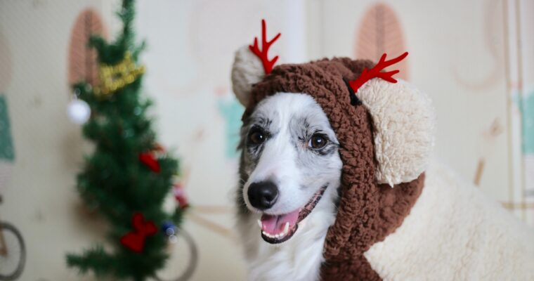 Christmas Gift Guide for Dogs and their Owners